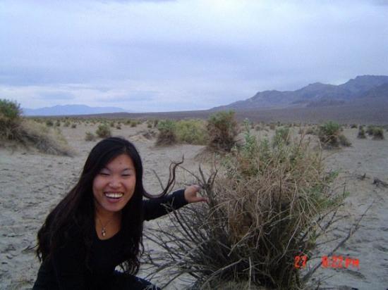 Lippincott Mine Road: 沙漠裡的荊棘原來在三年前呼喚我過!Burning bush ,Death Valley!How could I miss it?