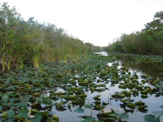 Air Boat USA: Les everglades à Miami