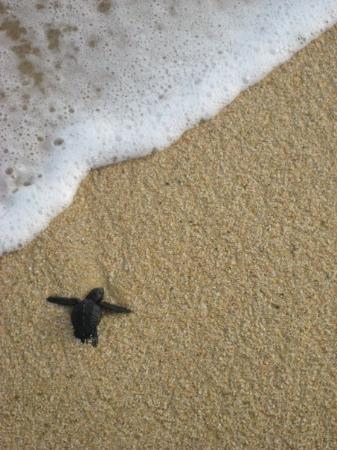 Playa del Amor Photo