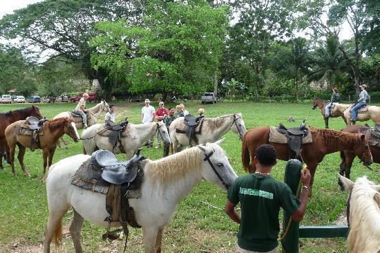 Banana Bank Lodge & Jungle Horseback Adventure: Gearing up to ride