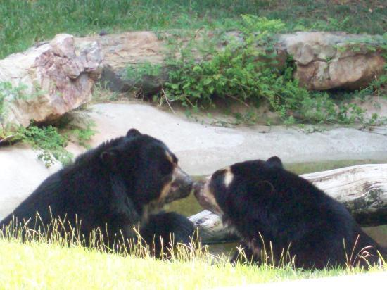 Baton Rouge Zoo: spectacled bears