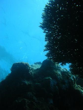 Mango Bay Resort Fiji: Table Coral:)