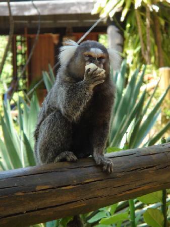 Vilangelim Eco-Pousada: vilangelim, imbassai, monkey