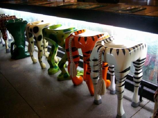 Bar stools - Picture of Rainforest Cafe, Orlando - TripAdvisor