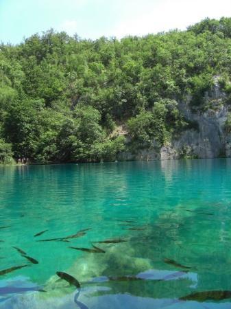 Rijeka, Croacia: Fishies!!!