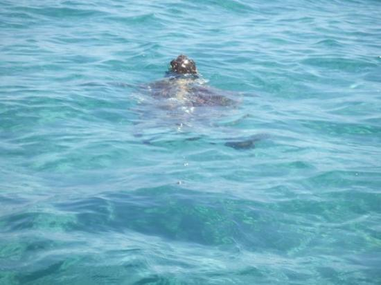 Kalamaki, Grécia: More turtle spotting from our pedalo