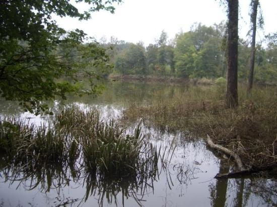 Forkland, AL: Beaver Pond