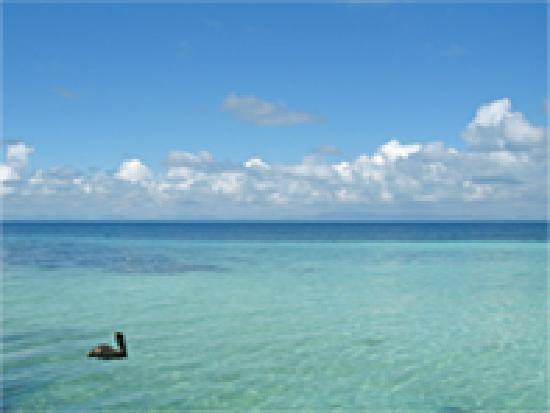 Swimming grounds at Coco Plum Island Resort