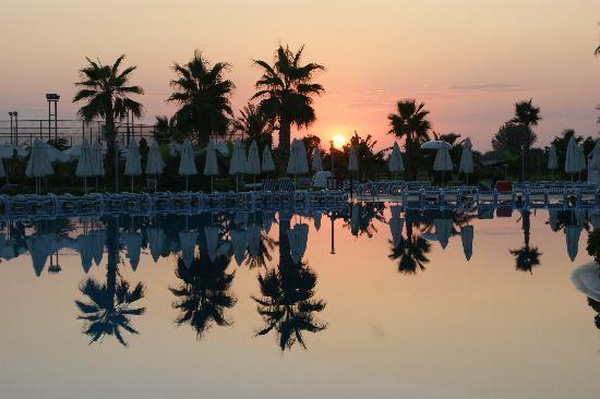 Amelia Beach Resort & Spa: pool at sunset
