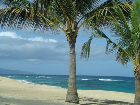 Haleiwa, HI: Looks like a desktop? Well it ain't! 