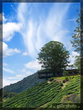 Tanah Rata, Malaysia: sky + tea