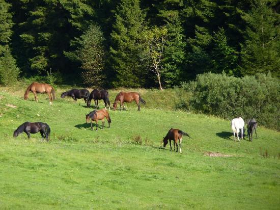 Chalets de la Vigotte : horses of the domain