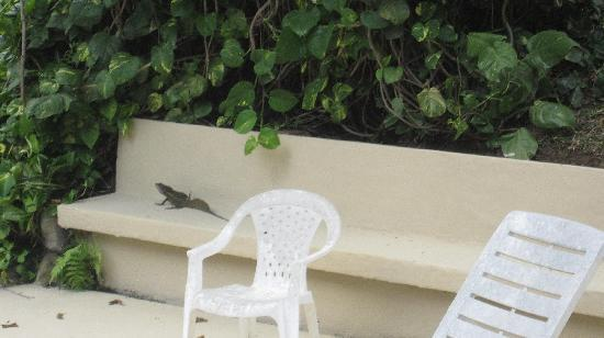 Hotel Trapp Family Country Inn: Little Lizard