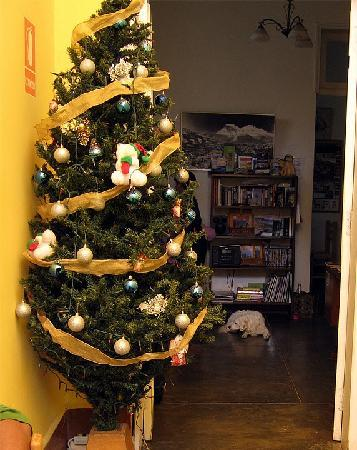 The Angels Inn Backpackers Peru: Perde the friendly dog and the Christmas tree in the common area