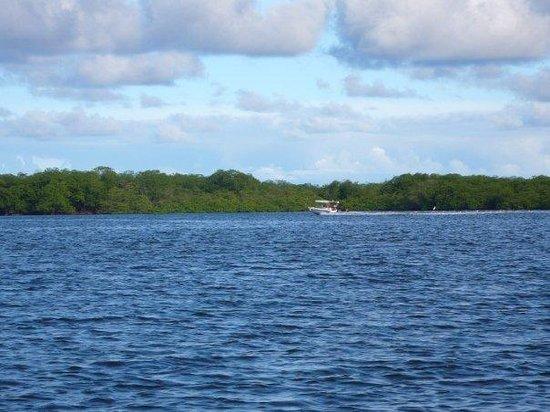 Ilha de Boipeba, BA: Este es el paisaje cuando ibamos camino a la isla