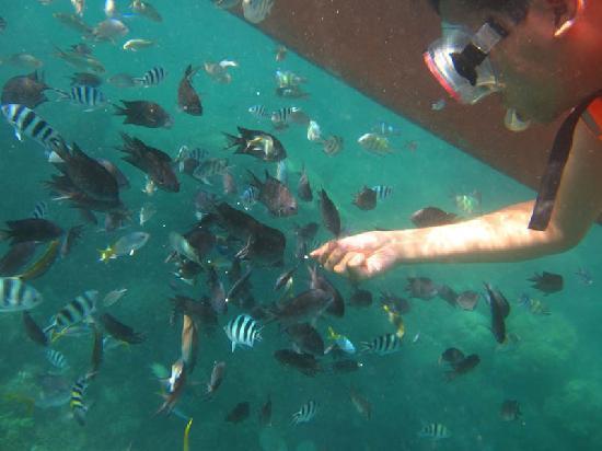 Majika's Island Resort: Sunken WWII Gun Boat