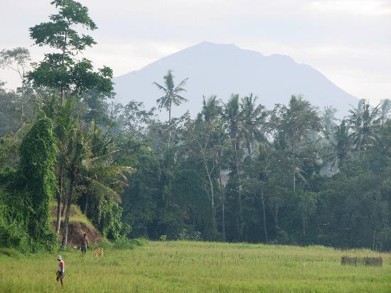 Bumi Ubud Resort: Gunung Agung in the morning from bumi ubud