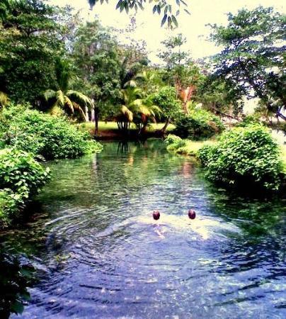 Jamaica Foto