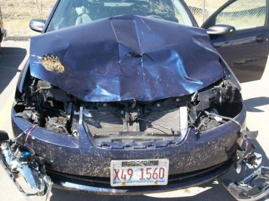 Hit A Deer On Our Honeymoon. Car Totaled, But Everyone