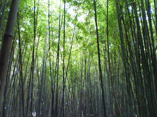 นีงะตะ, ญี่ปุ่น: 散策路