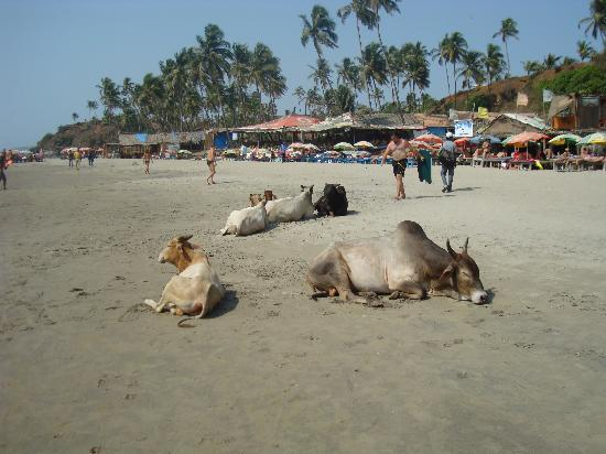 Goa, India: Vagator Beach