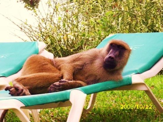 Diani Beach, Kenya: il est si timide ...