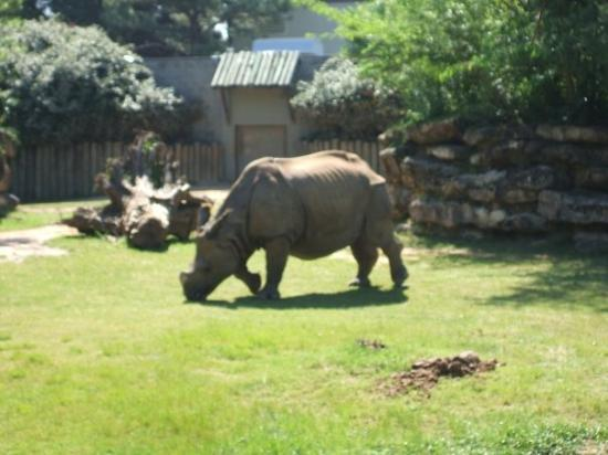 Montgomery Zoo: Rhino...large and in charge.....