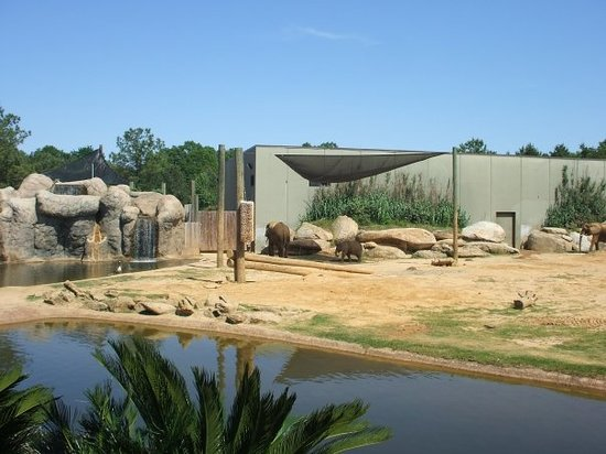 Montgomery Zoo: The elepants....