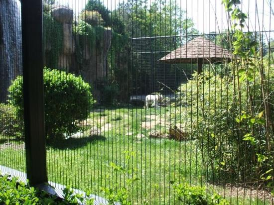 Montgomery Zoo: These tigers were really pretty.