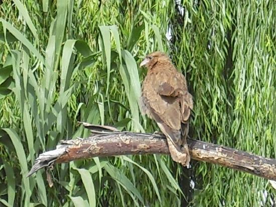 Cavas Wine Lodge: Bird watching