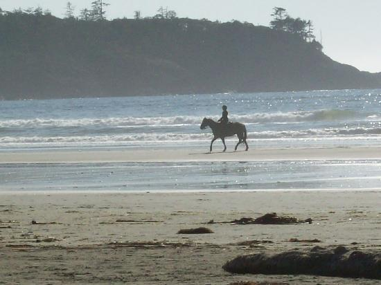 Long Beach Lodge Resort: Horse on the beach- cool eh!