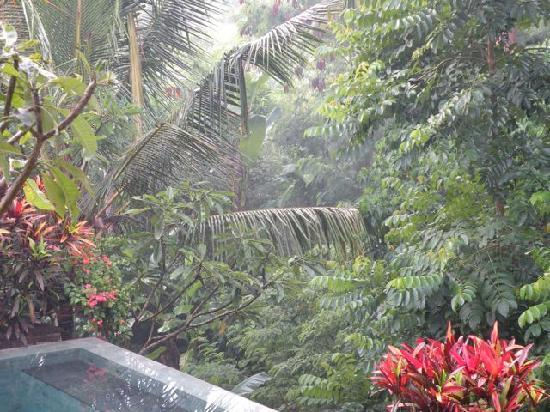 Kusuma Sari Villa & Spa: Boxing Day steamy heat
