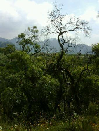 Tepoztlan, Meksika: View from the house