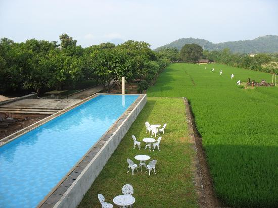 Thilanka Resort and Spa: Infinity pool, mango trees, and rice paddies