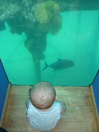 My Son Checking Out A Fish From The Underwater Restaurant