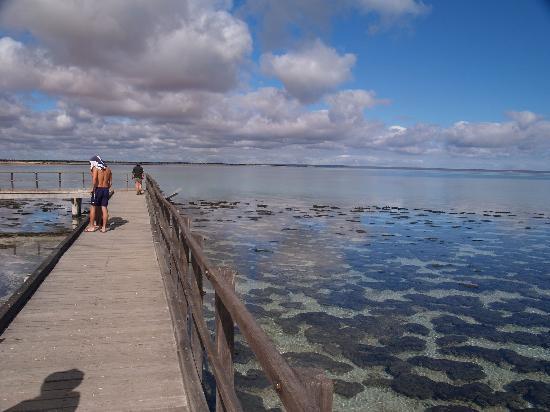 Hamelin Pool Marine Nature Reserve: 干潮時は遠くまで見えます。