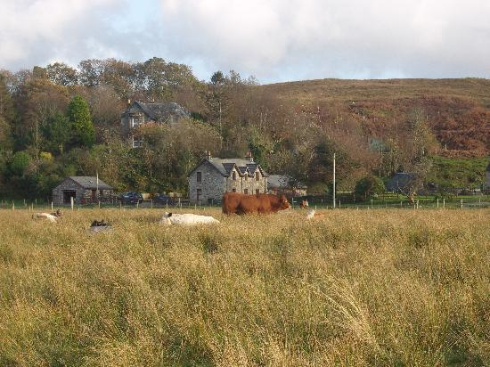 Achaleven Byre : The Byre and adjoining farmhouse from the road into Connel.
