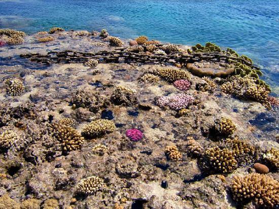 Sharm El Sheikh, Egipto: Reef exposed at low tide