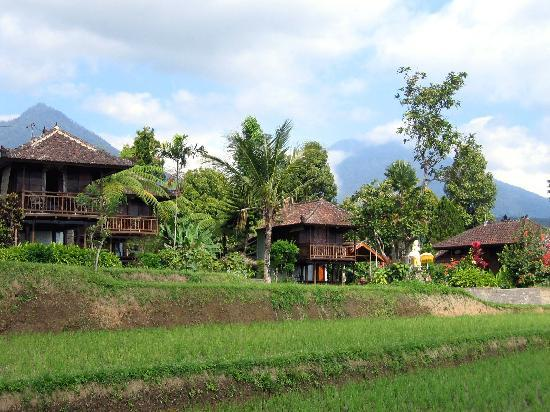 Puri Lumbung Cottages: L'hôtel