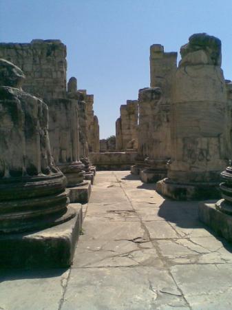 Didim, تركيا: Didim Apollon Tapınağı