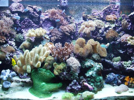 Barcelona aquarium picture of l aquarium de barcelona for Aquarium de barcelona