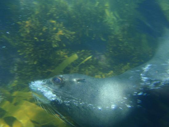 New Zealand: Swimming with seals - Kaikoura