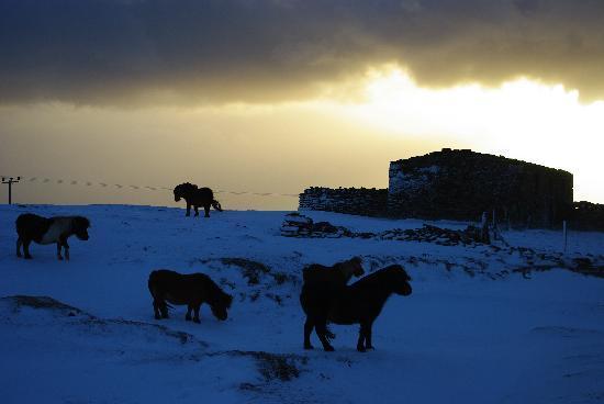 Woosung B & B: Shetlands