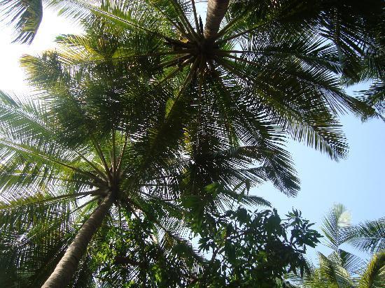 Kashid Beach Resort: View from the hammock