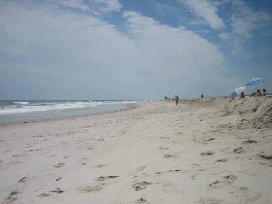 Assateague Island National Seashore Campground : the beach!
