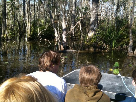Billie Swamp Safari: looking for alligators on air boat ride