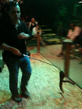 Billie Swamp Safari: Poisonous snake show