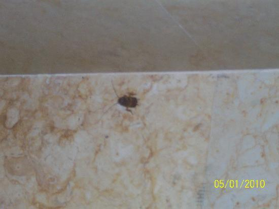 Nuevo Laredo, Messico: cockroaches at hotel