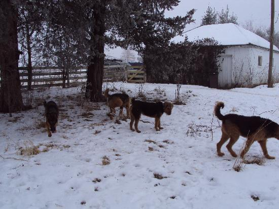 Tierra Linda Bed and Breakfast : All the puppies!
