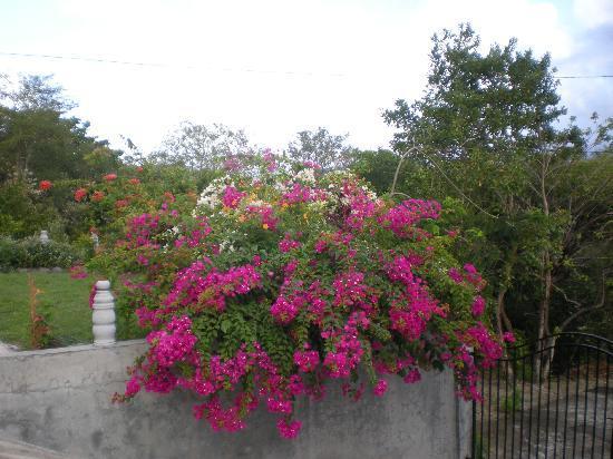 Zamaca Bed & Breakfast: Beautiful flowers at Zamaca